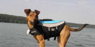 Kapok dla psa